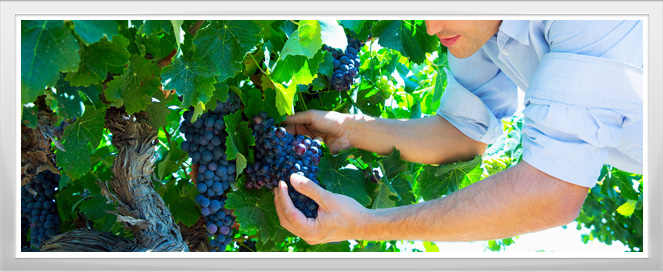 Viticulture Training Program