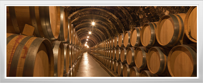 Wine Cellar Training Program